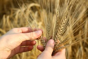 subventii, agricultura, Agentia de Plati si Interventie pentru Agricultura