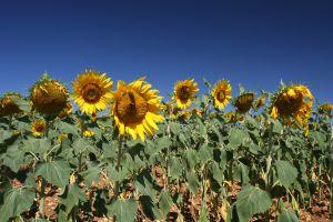 subventie, agricultura, Guvern, Ministerului Agriculturii si Dezvoltarii, Uniunea Europeana, Politica Agricola Comuna