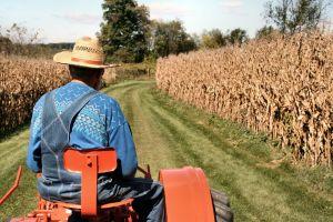 fermieri, agricultura, APIA, subventii