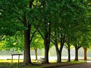 primarie, Bistrita, reamenajare parc