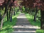 primarie, parc, Odobesti