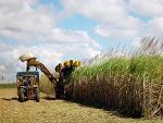 subventie, agricultura, Guvern, Ministerul Agriculturii si Dezvoltarii Rurale, Comisia Europeana