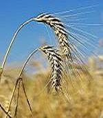 agricultura, fonduri europene, campanie, export, credit, asigurari