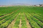 MAPDR, Comisia Europeana, subventii, agricultura, masuri, finantare