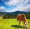 Mehedinti, ferme de subzistenta, fonduri europene, PNDR, fermieri