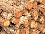 parchet stratificat, stejar, utilaje, fonduri europene, proiect