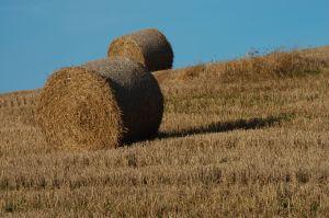 subventii directe, terenuri nelucrate, hectar, Uniunea Europeana