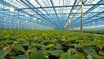 parteneri, fermieri, Flandra, eficienta energetica, subprogram SAVE
