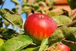 promovare produse agricole