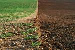 agricultura, cereri