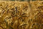 fonduri europene, agricultura