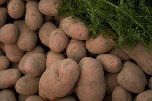 Ajutor pentru producatorii de cartofi ale caror recolte au fost distruse