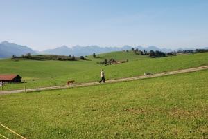 Sprijinirea fermelor agricole de semi-subzistenta – PNDR 141