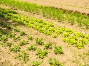 Guvernul a adoptat o noua Ordonanta de urgenta pentru a veni in sprijinul fermierilor