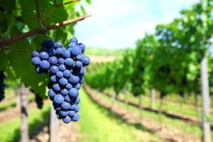 Camera Agricola din regiunea Rhône-Alpes, Franta, cauta parteneri in domeniul viticol