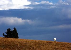 PNDR 2014 – 2020: Masuri de mediu si clima
