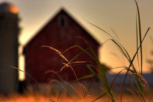 Cum s-a schimbat agricultura dupa 5 ani de fonduri europene