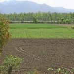agricultura-subventii