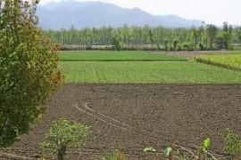 agricultura-asociere.jpg