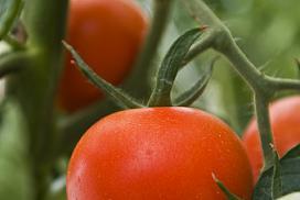 Ferma de legume bio cu fonduri europene