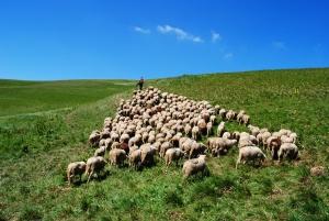APIA a platit fermierilor aproape 6 miliarde de lei, de la inceputul anului