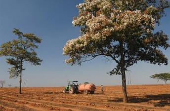 APIA: Ajutor de 16 euro/hectar pentru culturile amplasate pe teren arabil; plafonul sprijinului, aproape 111 milioane de euro