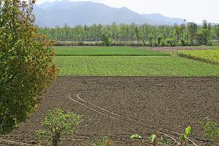 Incepand cu 2015, fermierii activi vor avea nevoie de cadastru si intabulare