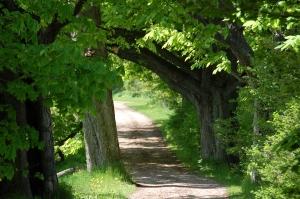 Se cauta parteneri in cadrul programului Orizont 2020, domeniul forestier