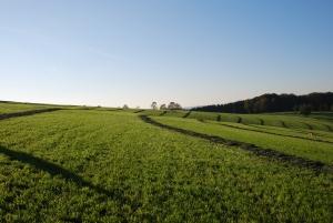 Fermierii pot cumpara terenuri, pana la intregirea 1.000 ha cu ajutorul unui credit garantat