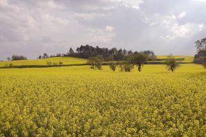 Fermier cu 2.700 ha in Teleorman: Poate fi din nou un an record pentru agricultura