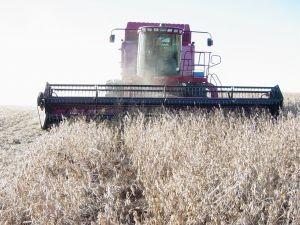 Cea mai mare firma britanica de management agro-zootehnic vrea sa investeasca in Romania