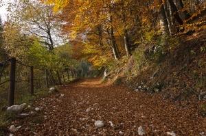 Drumurile din comuna nemteana Pipirig, reabilitate cu bani europeni