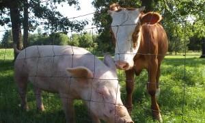 Transformarea deseurilor agricole in hrana pentru animale se poate face acum printr-un proiect finantat de UE