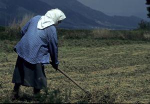 Sute de mii de fermieri afectati de cresterea plafonului minim de subventionare la 1,5 hectare