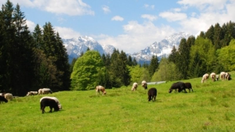 PNDR: Sprijin financiar pentru investitii in zona montana