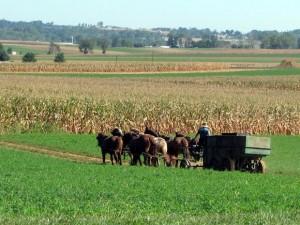 Lege: Strainii vor putea cumpara terenuri agricole, dar localnicii vor avea drept de preemtiune