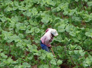 Birocratia bancilor impinge fermierii catre IFN-uri