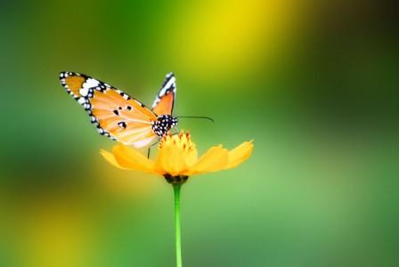 fluture.jpg