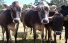 Control APIA la mai multe ferme din Iasi