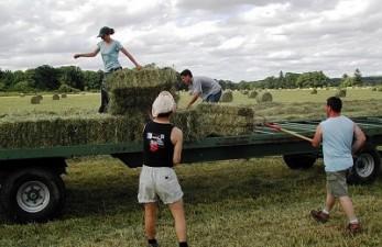 Guvernul a luat noi masuri financiare temporare pentru sustinerea agricultorilor