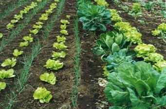 Uniunea Europeana va aloca fonduri suplimentare pentru dezvoltarea agriculturii ecologice