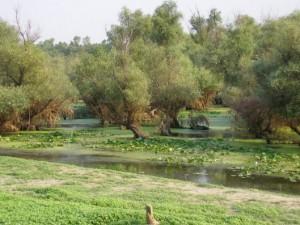 PNDR Masura 13 – Plati pentru zone care se confrunta cu constrangeri naturale sau cu alte constrangeri specifice 2014-2020