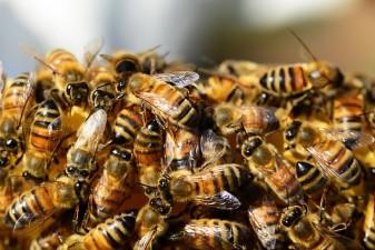 Caras-Severin: Asociatia Crescatorilor de Albine solicita sprijin Ministerului Agriculturii