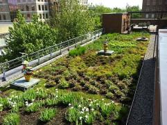 eco-farm.jpg