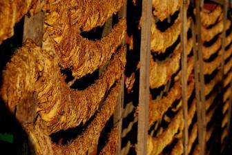 Subventii europene suplimentare pentru cultivatorii de tutun