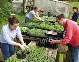 PNDR, submasura 6.1: Banii europeni pentru instalarea tinerilor fermieri sunt pe terminate