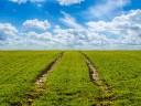 PNDR submăsura 4.3.A – Investiții pentru dezvoltarea, modernizarea sau adaptarea infrastructurii agricole şi silvice – Infrastructura de acces AGRICOLĂ
