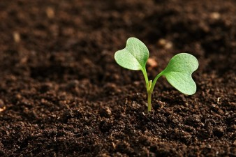 ASAS: Fenomenele climatice din ultima perioada au dus la pierderi in pomicultura si viticultura; comisiile locale sa evalueze pagubele