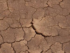 Fermierii ar putea fi despagubiti in urma secetei din acest an