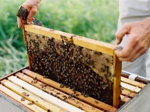 Fonduri UE pentru apicultori: Peste 21 de milioane de euro in anii 2017-2019